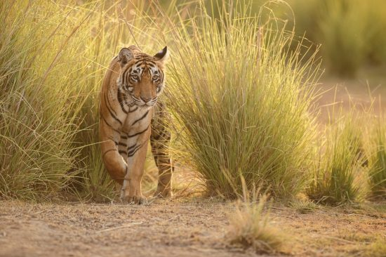 Private Tours of India's Golden Triangle & Ranthambore 2019 & 2020