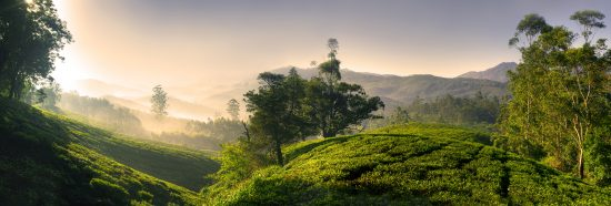Hills of Kerala
